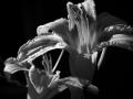 flower_study
