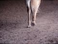 upstate_cowgirl_2.jpg