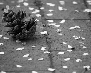Flowered Pine Cone