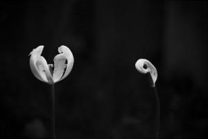 Fallen Petals Revisited