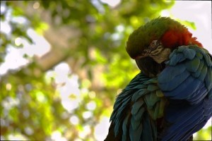 The Rainbow Macaw