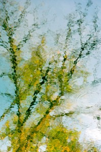 Monet Branches