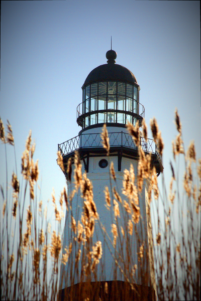 Lighthouse in the Reeds - Montauk Point Lighthouse