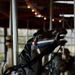 Greenport Carousel Horse